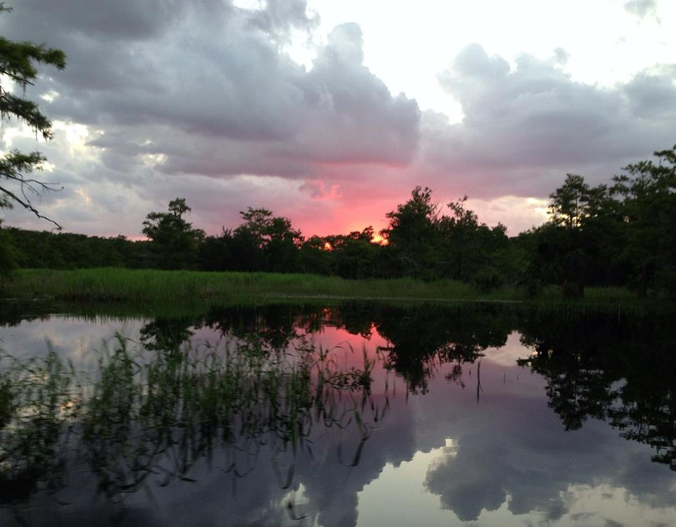 Fisheating creek last evening by patty register swampy 39 s for Fish creek florida
