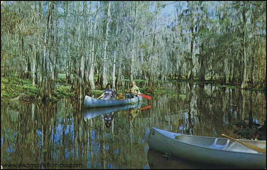 Swampy s postcard thursday canoeing fisheating creek for Fish creek florida