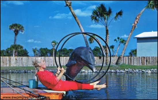 2013-0815-FloridaLand-Porpoise
