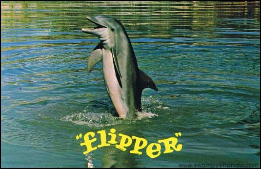 2013-1007-Flipper