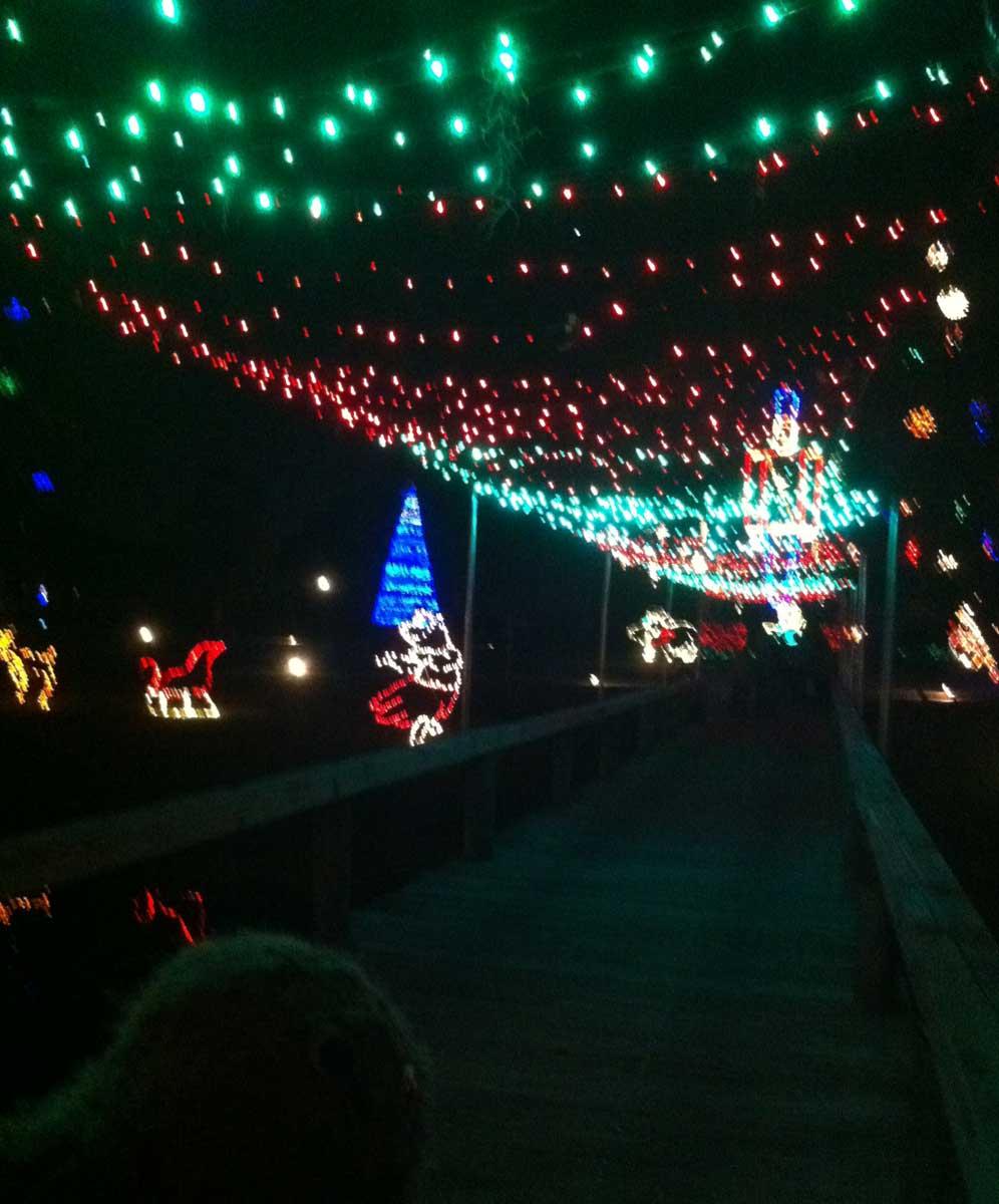 Swampy's Christmas Travels: Venetian Gardens, Leesburg. – Swampy's