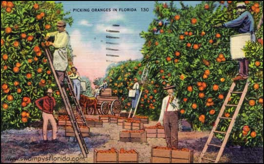 2014-0123-PickingOranges