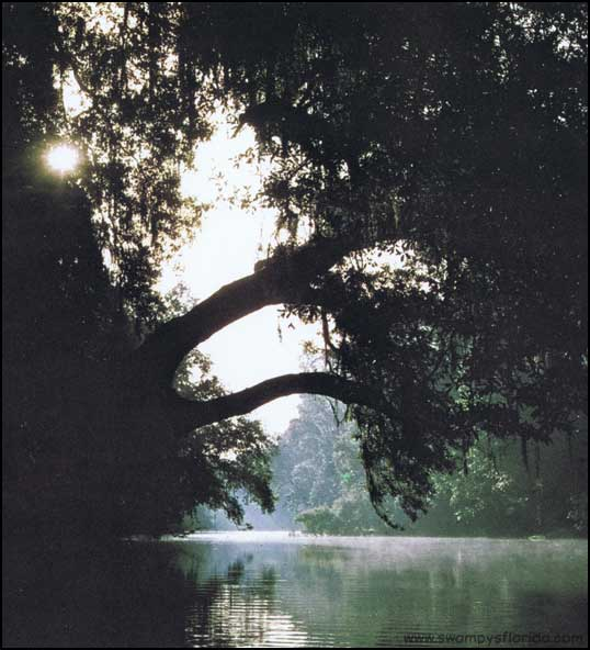 Swampy's Florida historic Photos: Santa Fe River, 1972