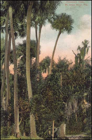2014-0224-PalmTrees