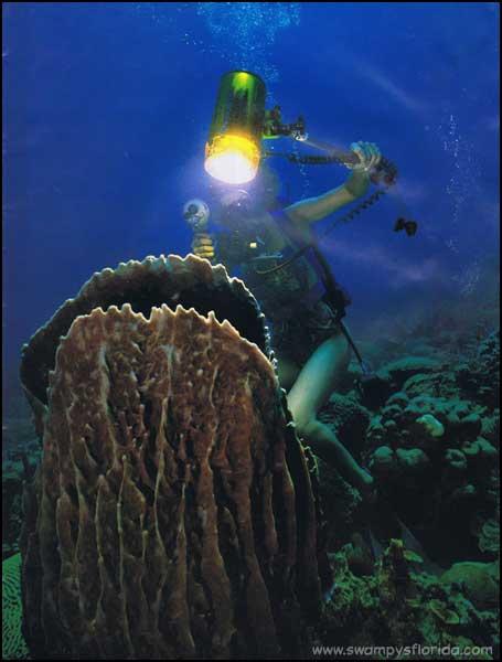 2014-0225-SpongeDiving