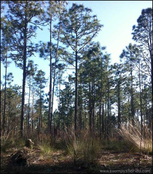 2014-0228-2-SilverSprings-Swampy