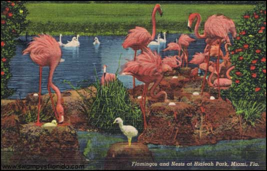 2014-0313-Hialeah-Flamingo