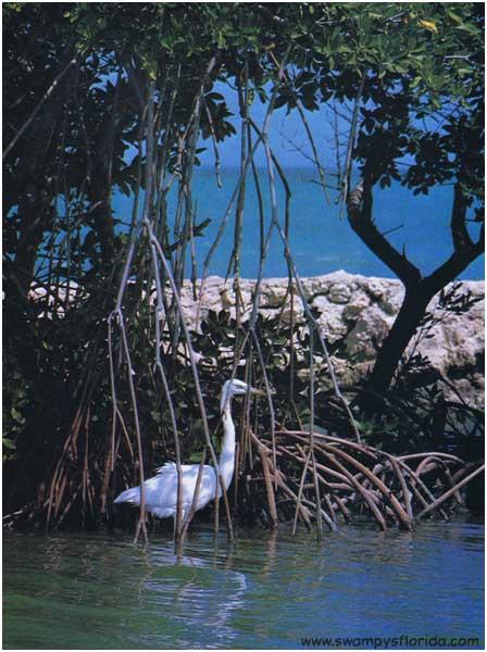 2014-0423-HeronEverglades