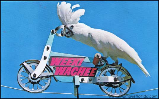 2014-0515-WeekiWachee-Parrot