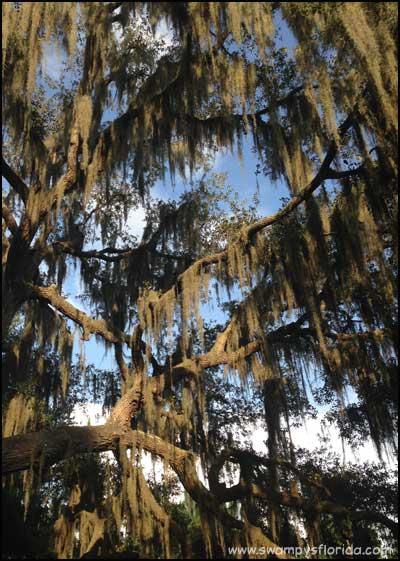 2014-0701-SwampyTRavels-Withlacoochee