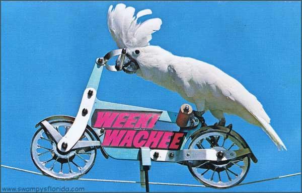 2015-0216-WeekiWachee-ParotBike