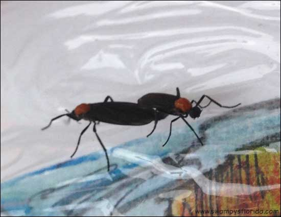 2015-0419-SwampysFlorida-FromSat-FirstLovebugs